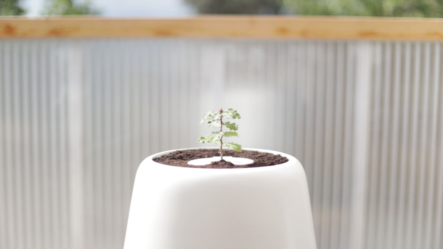 Bios Incube is the world´s first system designed to help grow the remains of your loved ones into trees.