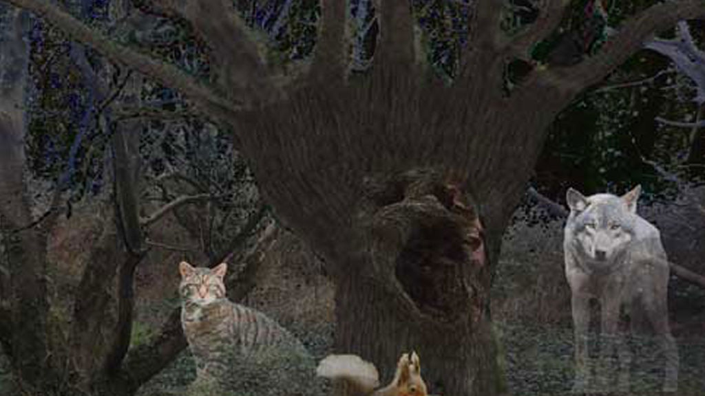 Children Of The Wise Oak - Self publishing book - Fantasy project video thumbnail