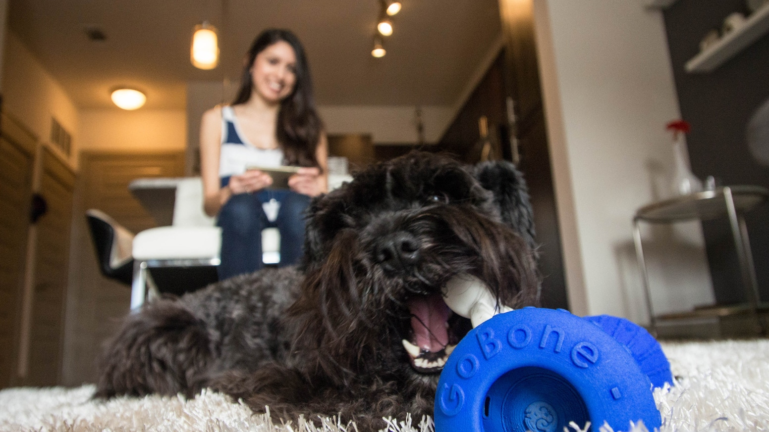 GoBone automatically entertains your dog while you're busy and opens up a whole new world of play when you're together.