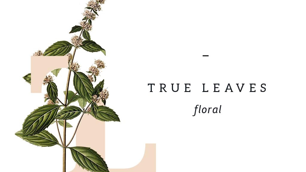 True Leaves Floral - Locally grown flowers in Bushwick, BK project video thumbnail