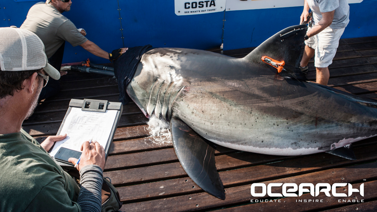 Fund our next expedition to tag and research Great White Sharks in the North Atlantic while open sourcing the collected data to all.
