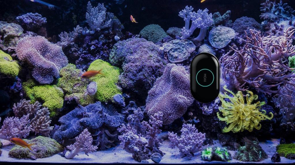 Moai robot for your aquarium by moai kickstarter for Fish tank riddle
