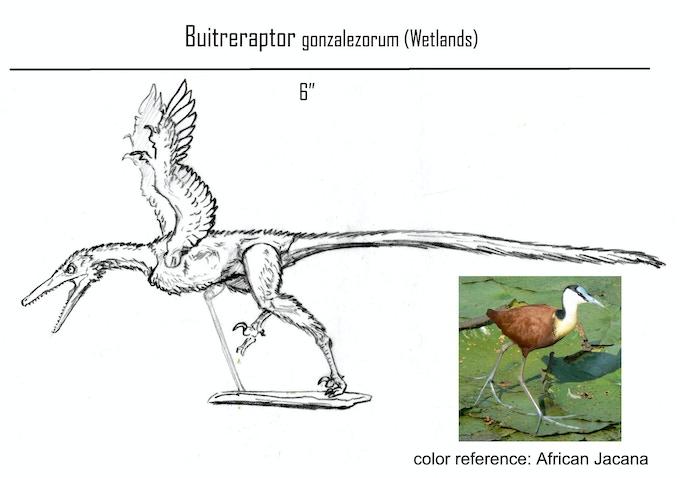Buitreraptor- Wetlands