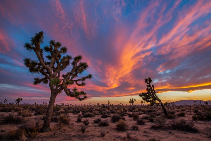 Joshua Tree Desert (California)