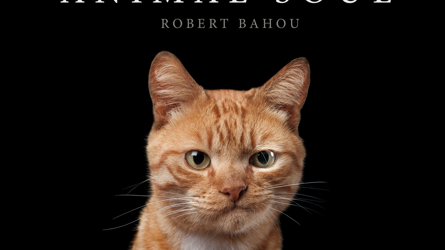 A coffee-table book of close and personal animal portraits by award-winning photographer Robert Bahou.