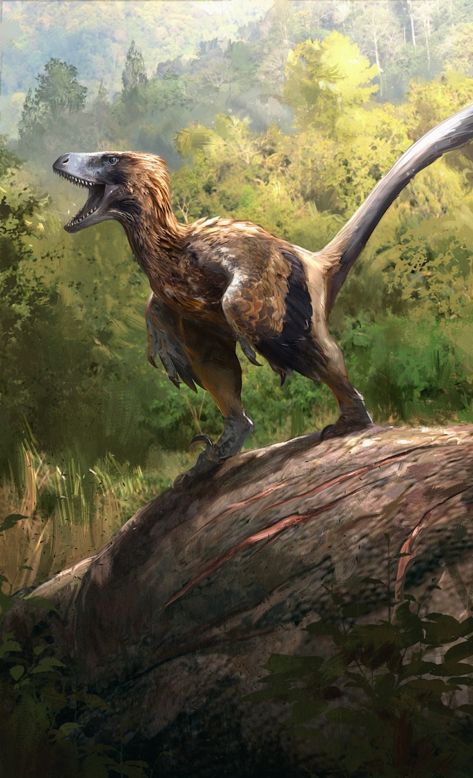 'Pyroraptor package art by Jonathan Kuo'
