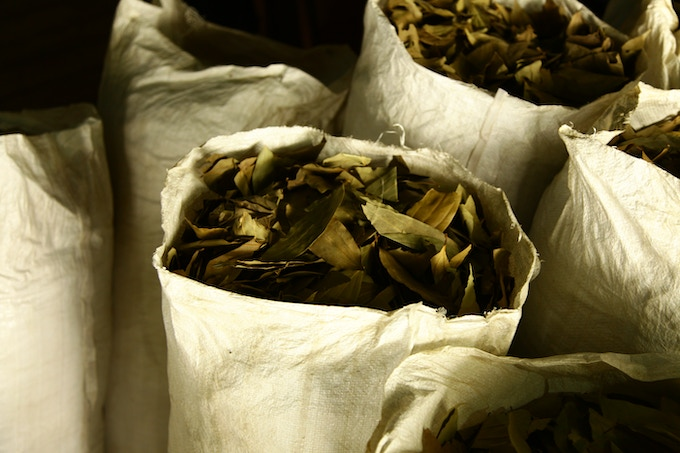 Cinnamon leaves collected by the tea farmer brings an additional income during off-seasonal period