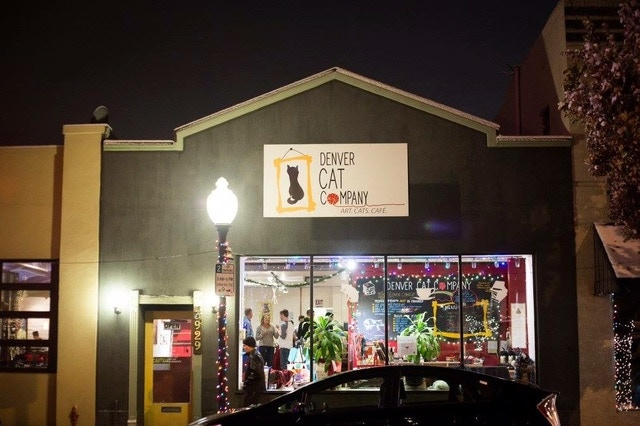 Denver's Original Cat Cafe. A haven for cats and people alike!