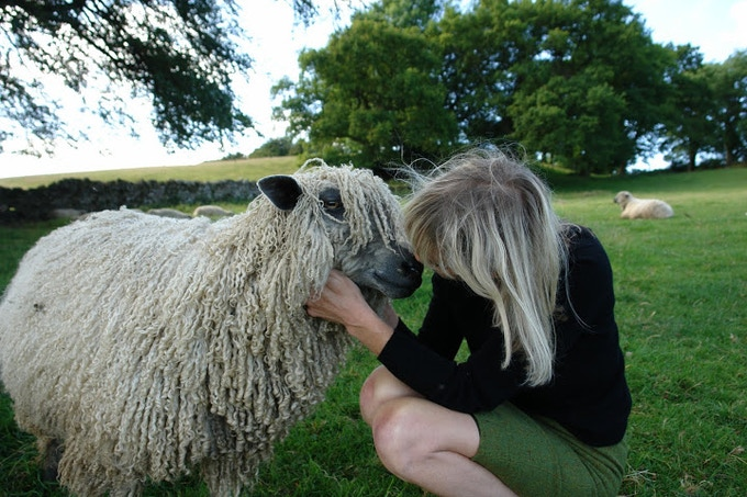 One of our beautiful Wensleydales