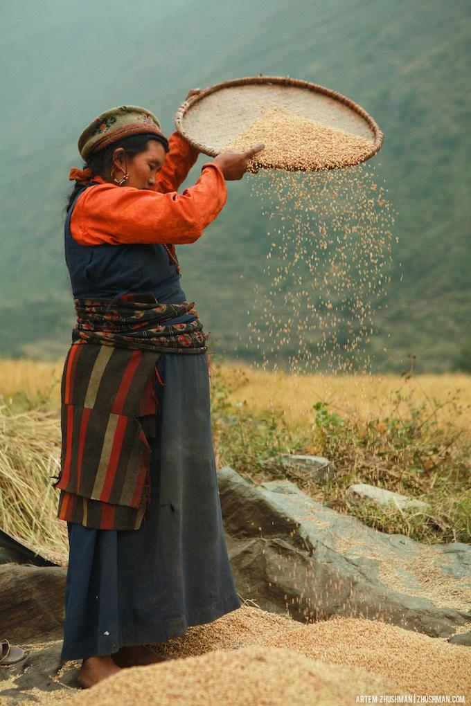 Sifting rice near Gatlang village.