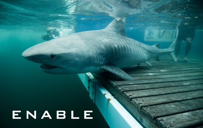 OCEARCH -Fund Critical Shark Research with Open Sourced Data by