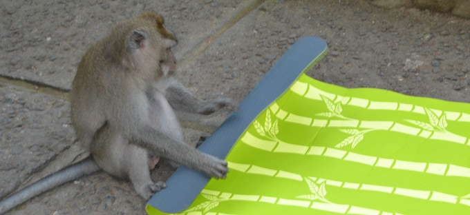Bagus kids yoga Mats are easy to roll up! Monkey approved