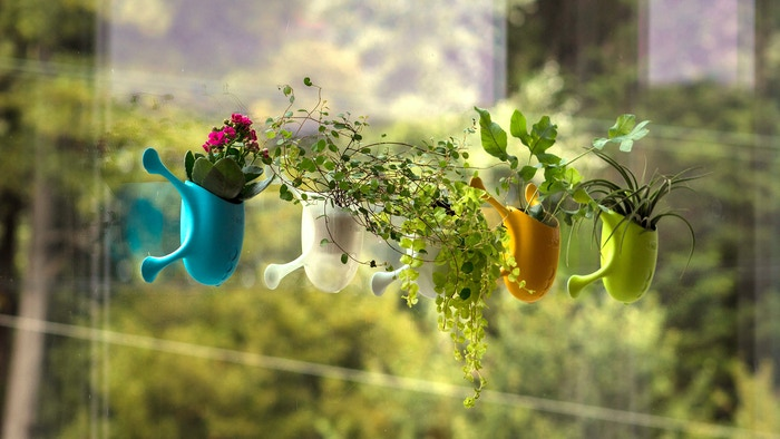 Livi is a versatile planter for virtually any vertical surface. Livi is a vivid creature that reimagines the way we relate to plants!