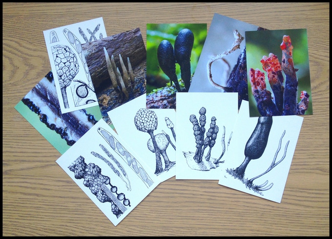 Sample of possible postcard designs using field photographs and line drawings.