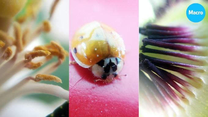 lemon flower / ladybug / passion fruit flower shot with Blips MACRO lens