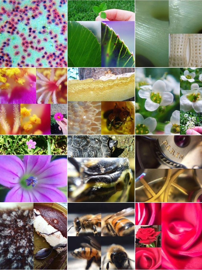 Instagram gallery shot with Blips Macro, Micro & ULTRA lenses