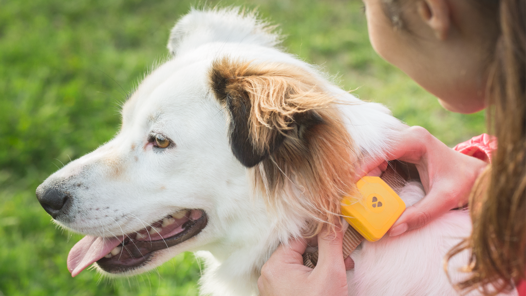 Findster Duo - The 1st GPS Pet Tracker Free of Monthly Fees! project video thumbnail