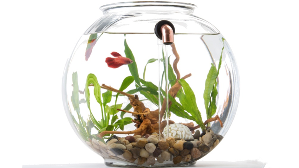 NoClean Aquariums: Eco-Friendly Self-Cleaning Glass Fishbowl project video thumbnail