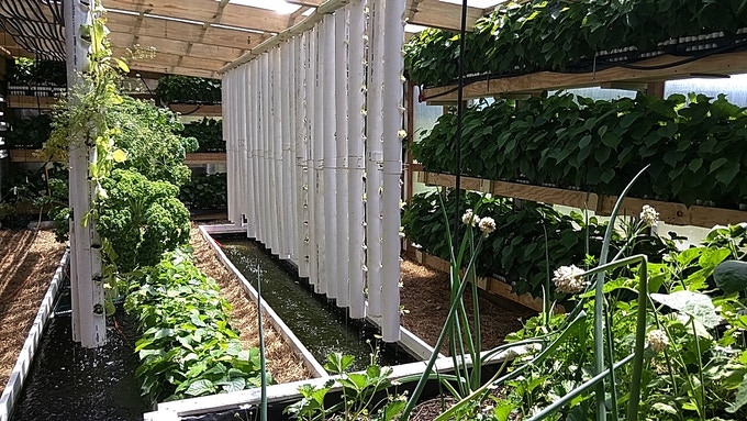 Aquaponic greenhouse - built in November 2015 (click for more info)