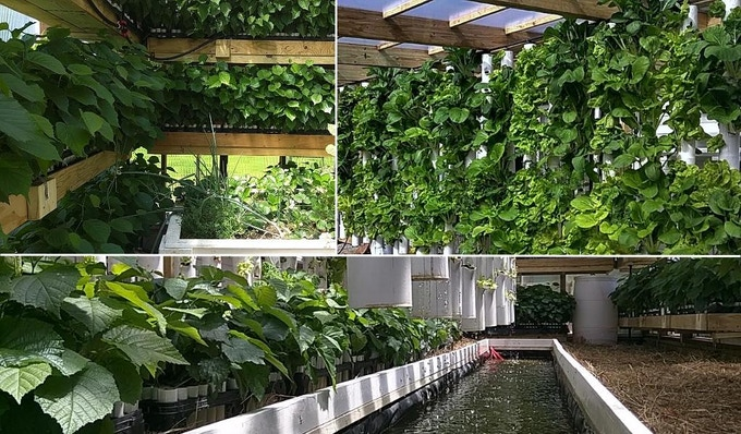 Our attached aquaponic greenhouse provides passive solar heating and year-round food production - Factor e Farm (Missouri, US) - Built in 2015 (click for more info). Update: you can now pledge for an Aquaponic Greenhouse Build, see the high end rewards.