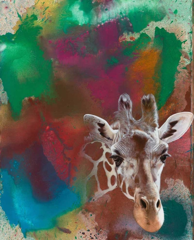 THE RIGHT TO EXIST features a life-sized portrait of Akeem, a long-lived beloved giraffe from the Oregon Zoo, by Calley O'Neill with a spray painted background by Rama the Elephant.
