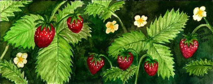 Strawberries by Vera Crouch