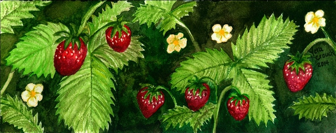 Strawberries by Vera Crouch