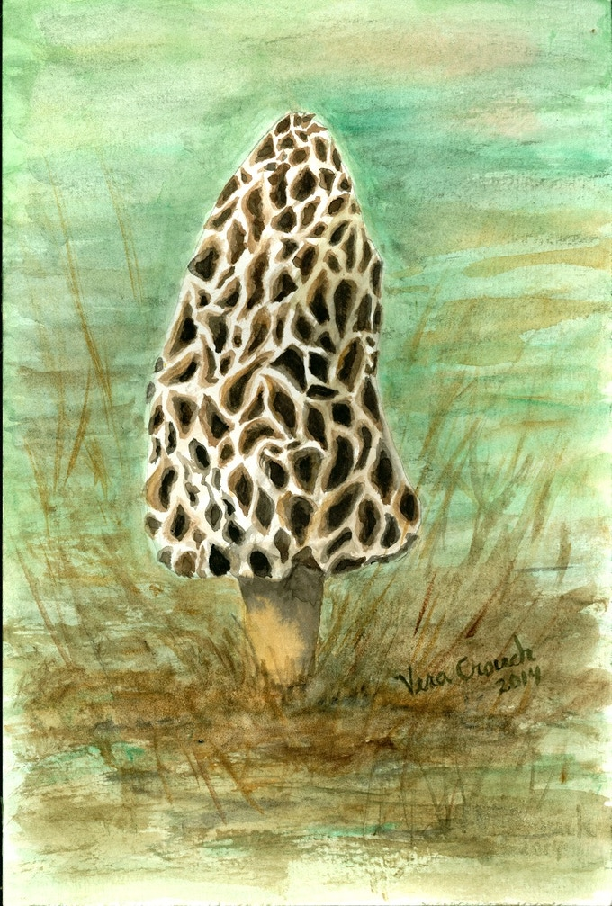 Yellow Morel by Vera Crouch - This was done on cheaper paper with cheaper paint. The difference is quite noticeable.