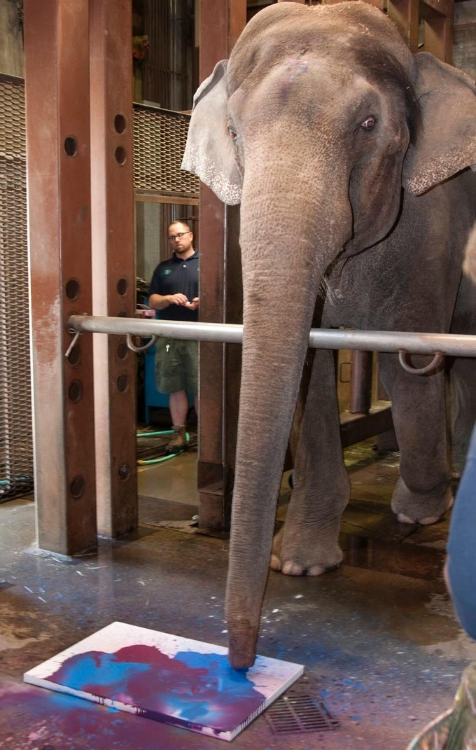 Rama painting as Senior Elephant Zookeeper Bob Lee observes.  Rama enjoyed painting so much that the minute he heard the crew setting up, he was right outside the door, enthusiastically awaiting his admission to the barn.