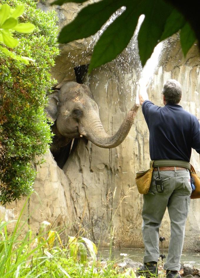 Jeb Barsh, Elephant Keeper and Rama the Elephant