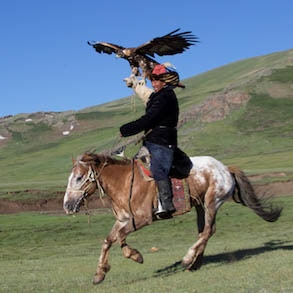 Ardak the Eagle Falconer and Balapan, the Golden Eagle, in the summer grazing grounds of western Mongolia, in the Altai Mountains near China