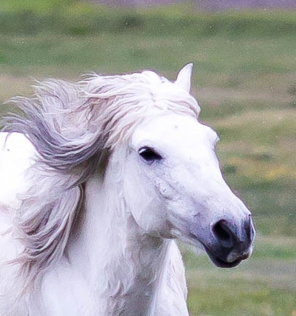 The Wind Horse, a Character in The Twelfth Eagle based on Central Asian Folklore