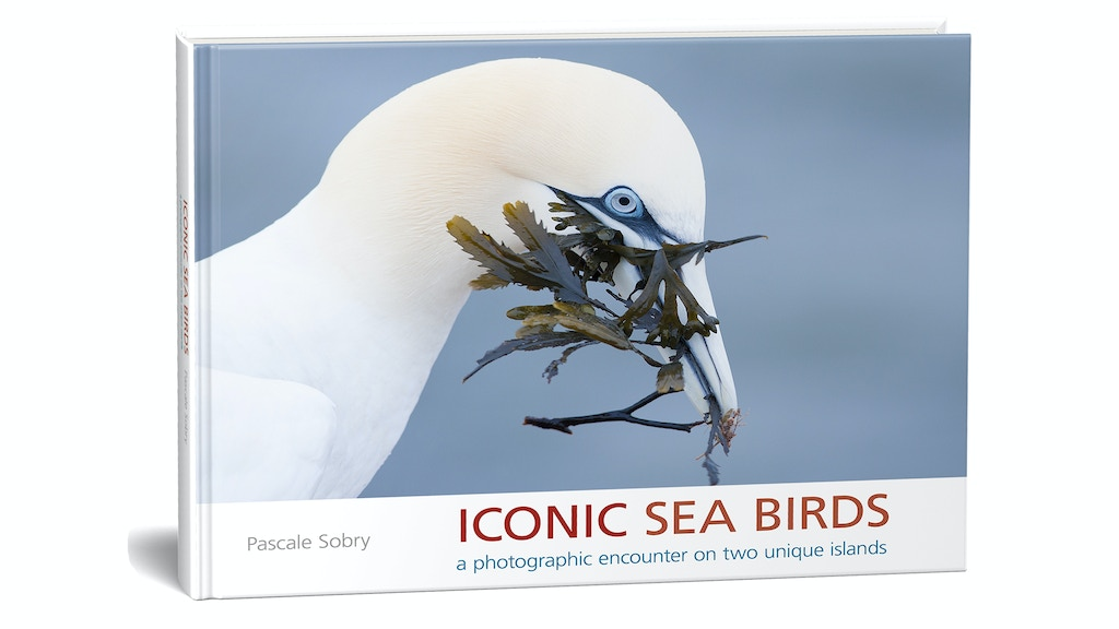 """""""Iconic Sea Birds"""" a photobook project project video thumbnail"""