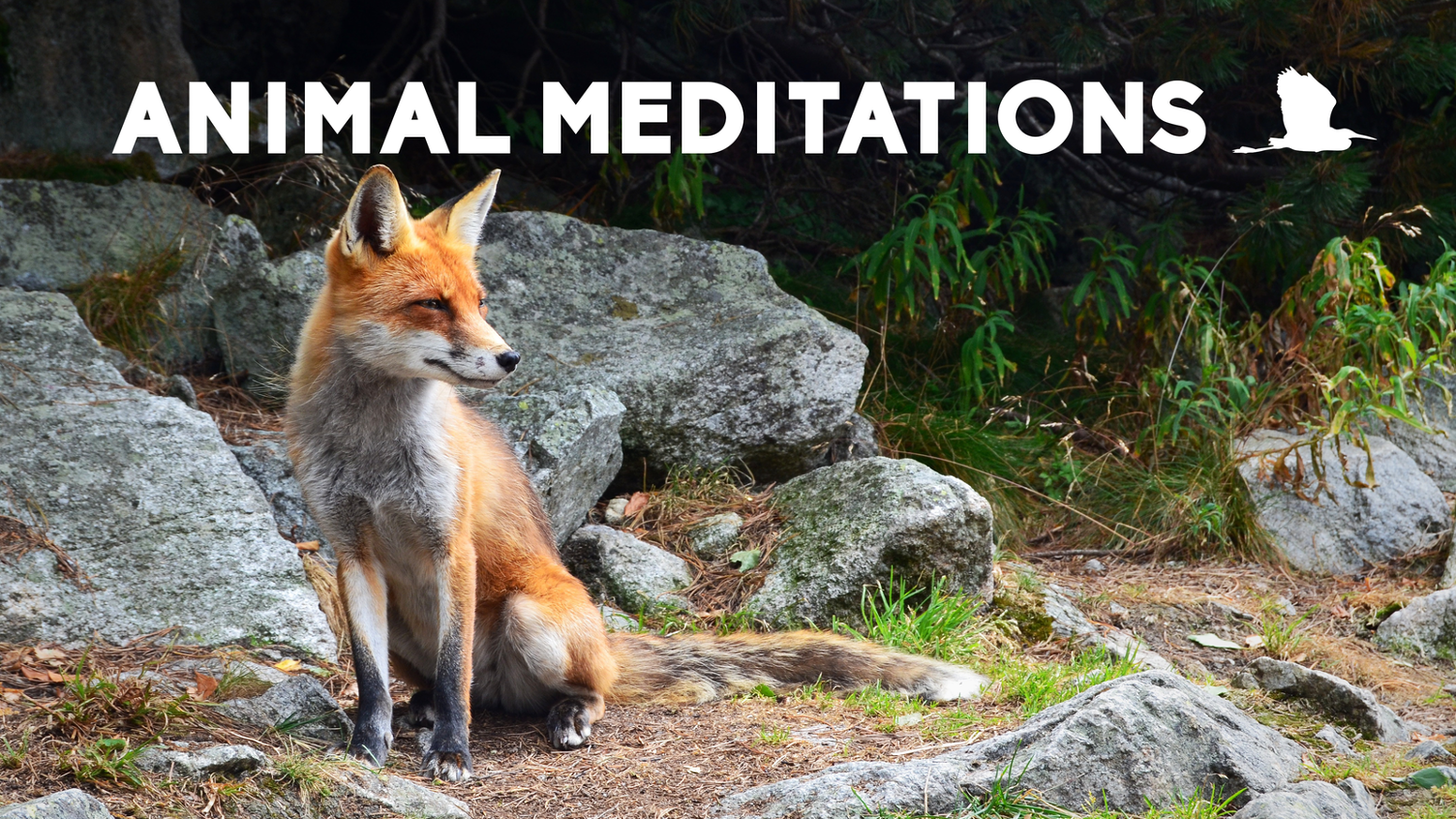 A collection of guided meditations inside the body and habitat of various animals.