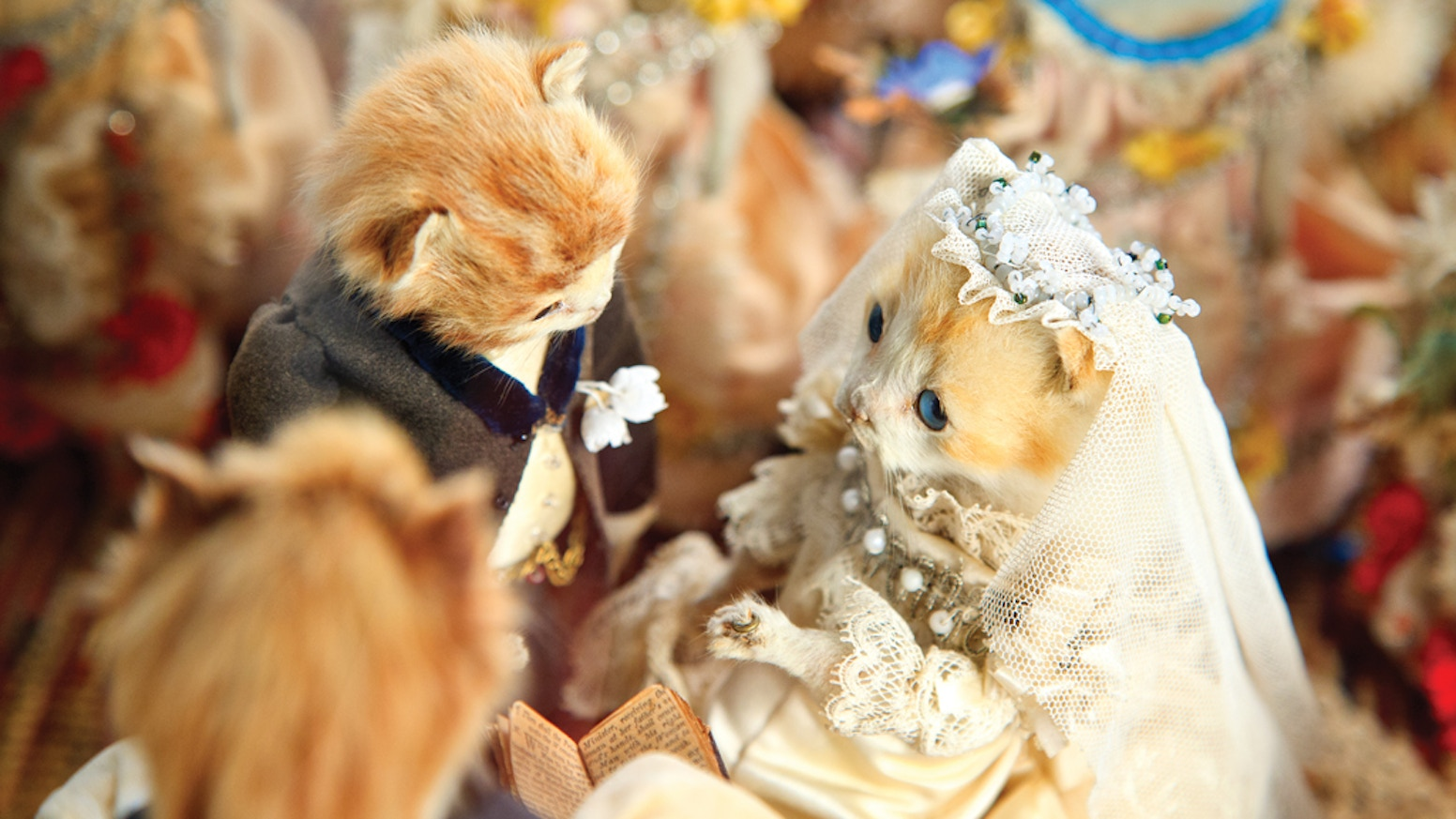 Help Us Bring Walter Potters Kitten Wedding To New York By Morbid