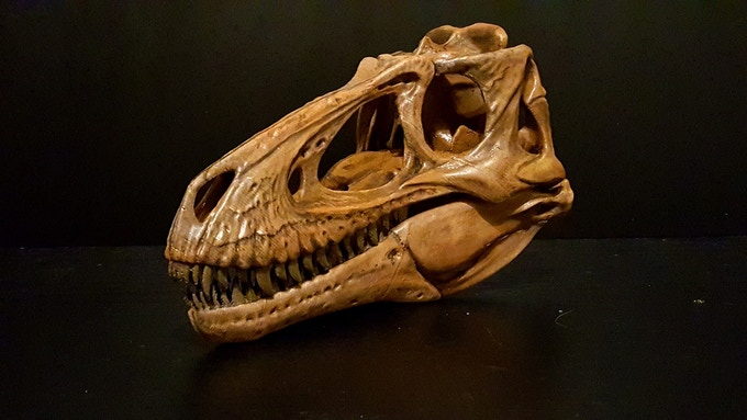 Prototype of the Nano/Juvenile Tyrannosaurus Skull