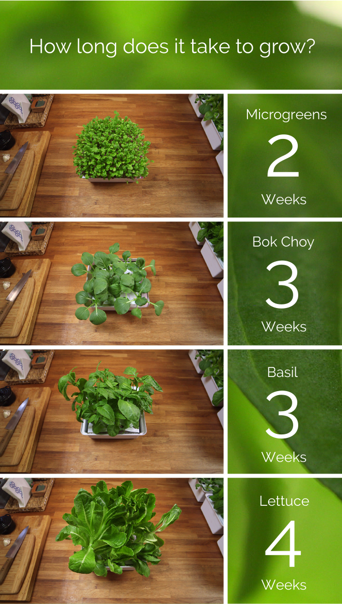 nanofarm the food growing appliance by replantable. Black Bedroom Furniture Sets. Home Design Ideas