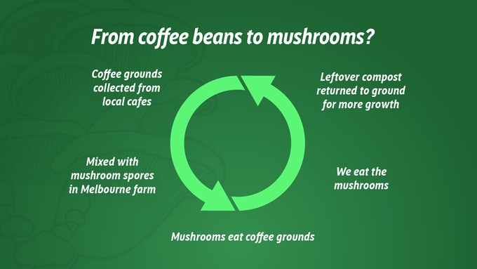 LIFE CYKEL: Melbourne's First Coffee Waste Mushroom Farm by
