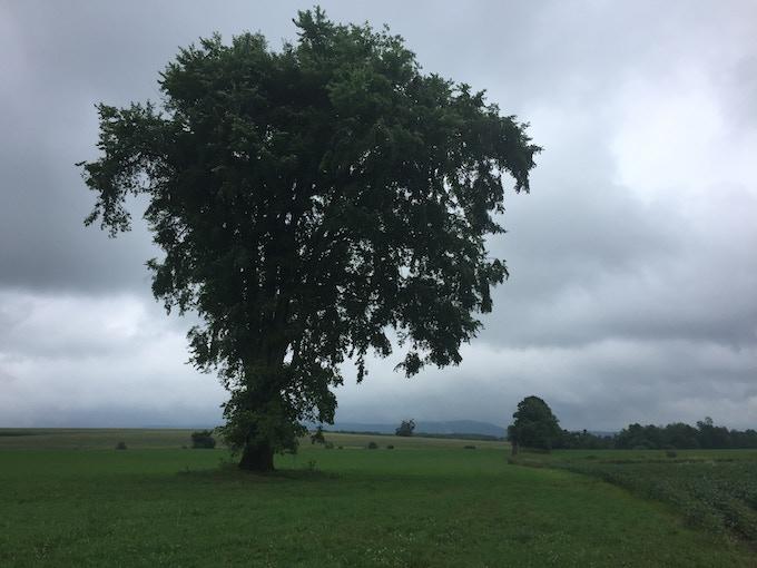 Fake-Italy: Tree Pinocchio climbs