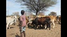 Increasing Dry Season Animal Feed in South Africa from Lawns