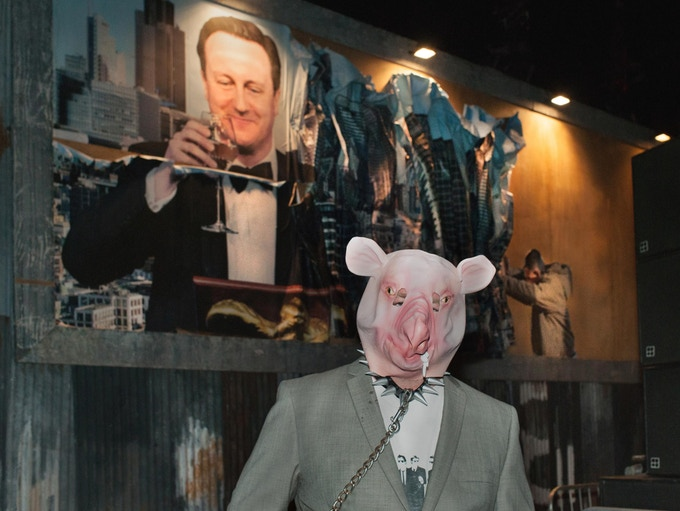 'A Pig in a Poke' Photograph by Barry Cawston