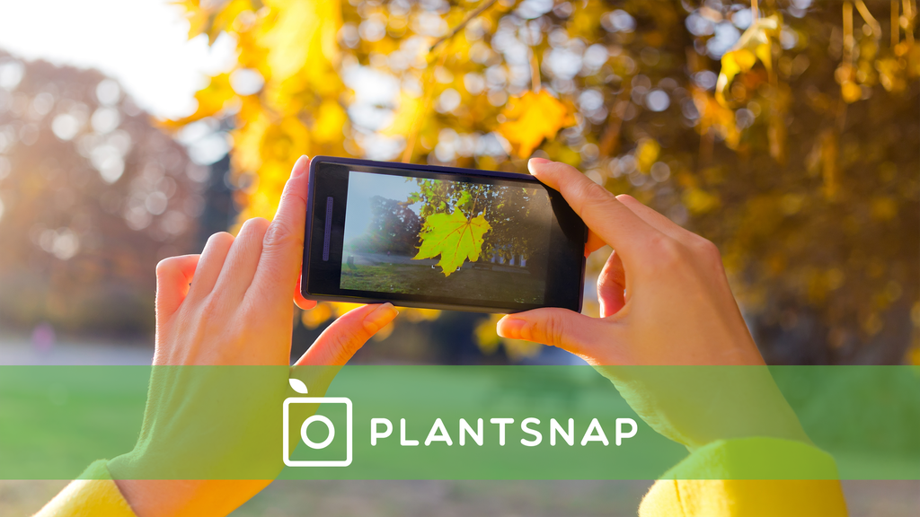 PlantSnap: Identify Plants with an App project video thumbnail
