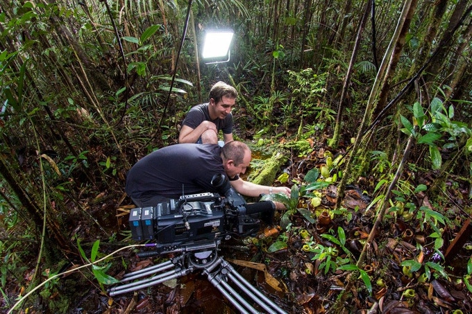 Kevin Flay and Stewart McPherson filming pitcher plants in Borneo
