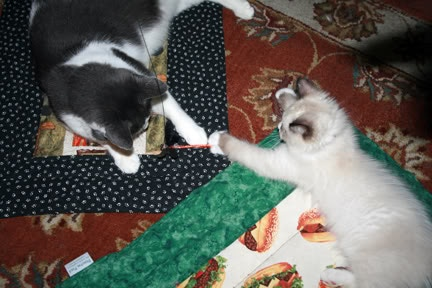Dibs!  It is best to get a pad per cat - they don't like to share!