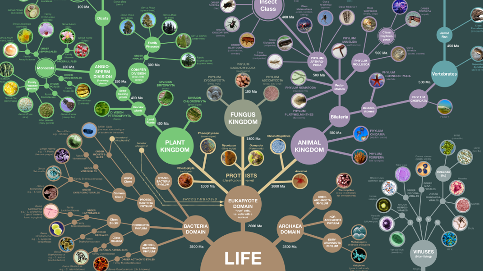 evolution of life - HD1552×873