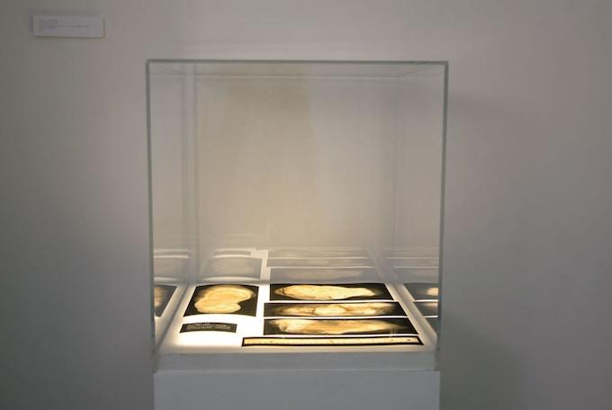 "Specimen #2518. 2015. display trans film, plexi vitrine, light box. 39 x 15 x 15"""