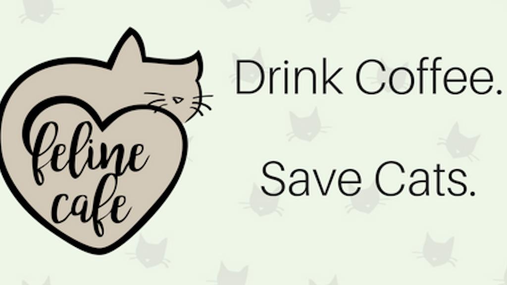 Feline Cafe Ottawa project video thumbnail