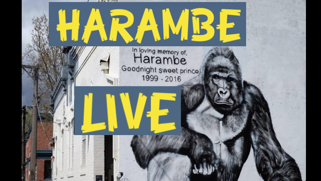 Harambe Live: How to make an idea go viral project video thumbnail