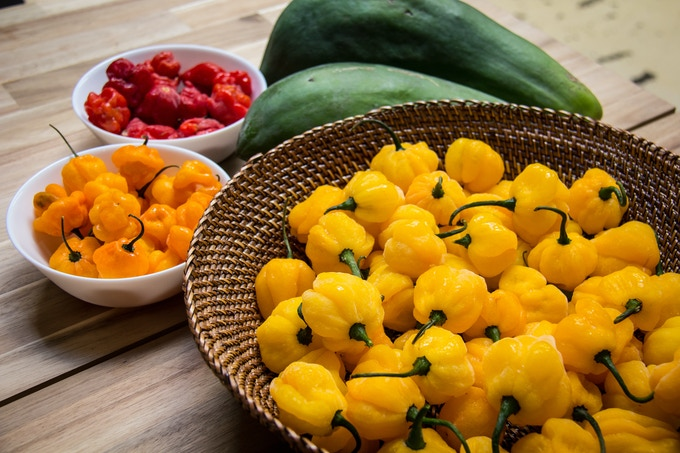 All our peppers are hand-picked, and go directly into the hot sauce.