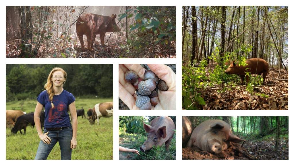 Forage Forest for Tasty, Happy Meats project video thumbnail